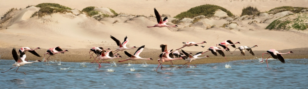 Flamingo's Skeleton Coast