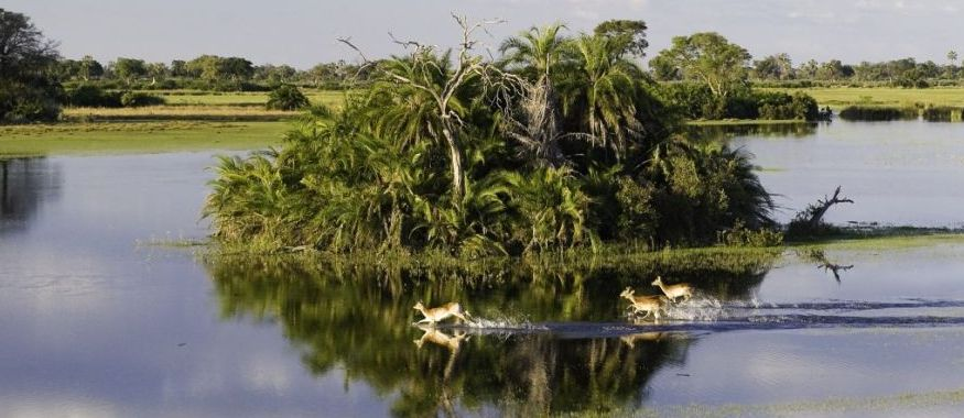 Okavango_beauty_da.jpg