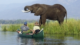 Mana canoe Trails elephant ©Colin Bell