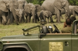 Seba elephant meeting ©Wilderness Safaris