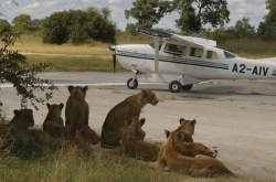 Vumbura lions and plane ©Brian Worsley
